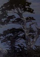twisted tree california coast