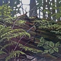 cedar returning to forest floor