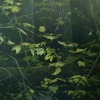 vine-maple colour in dark forest