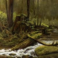 water flowing through old cedar forest